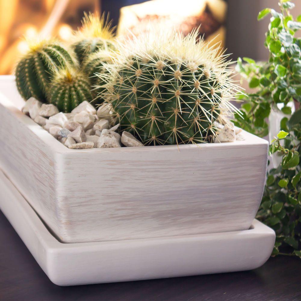 plantation cactus pot. Black Bedroom Furniture Sets. Home Design Ideas