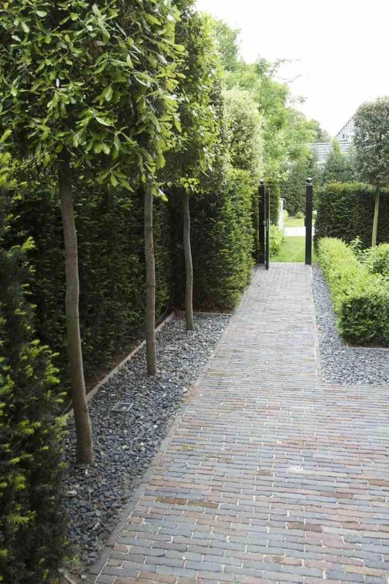 Garden trees for screening  garten Wie man einen modernen Landschaftsgarten baut Wie man