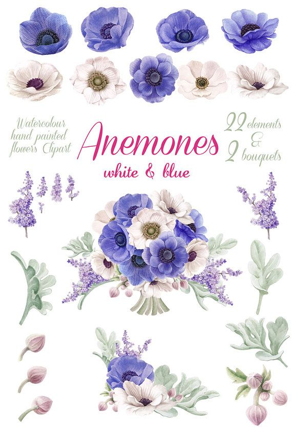 Watercolour Flowers Clip Art White And Blue Anemones Separate Elements Flowers Bouquets Wedding Invitation In 2020 Flower Clipart Watercolor Flowers Flower Drawing