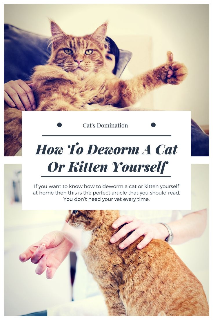 If You Want To Know How To Deworm A Cat Or Kitten Yourself At Home Then This Is The Perfect Article That You Should Read You Don T Need Yo Cats Kitten