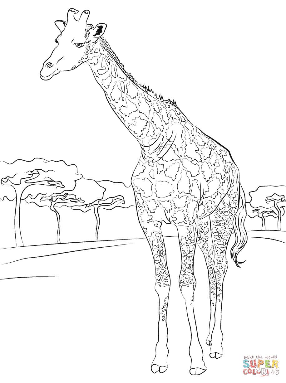 33++ Supercoloring zoo ideas