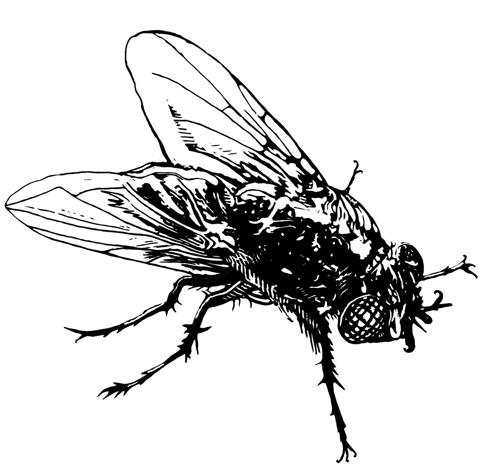 fly Google Search Line Drawings