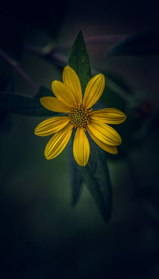 Know Your Worth by Paul Barson on 500px.com
