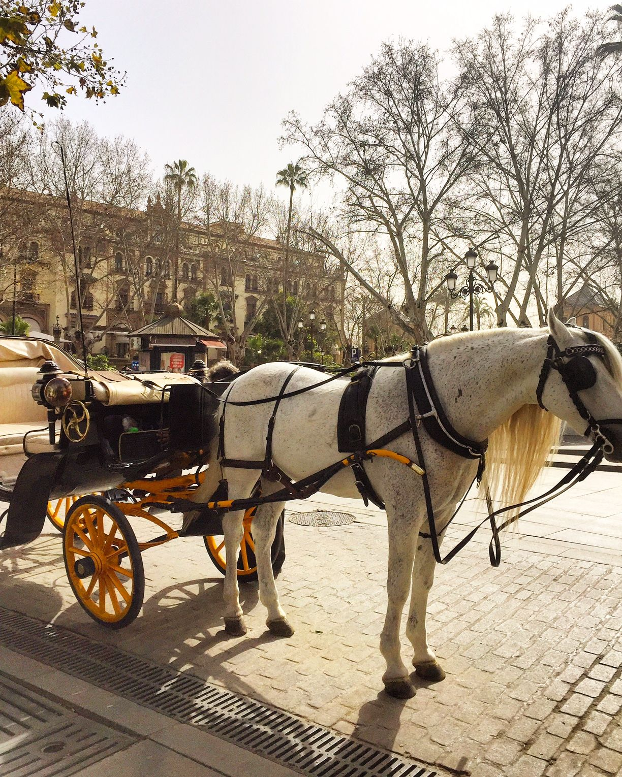 Horse and Carriage in Seville #travel #spain #weekends