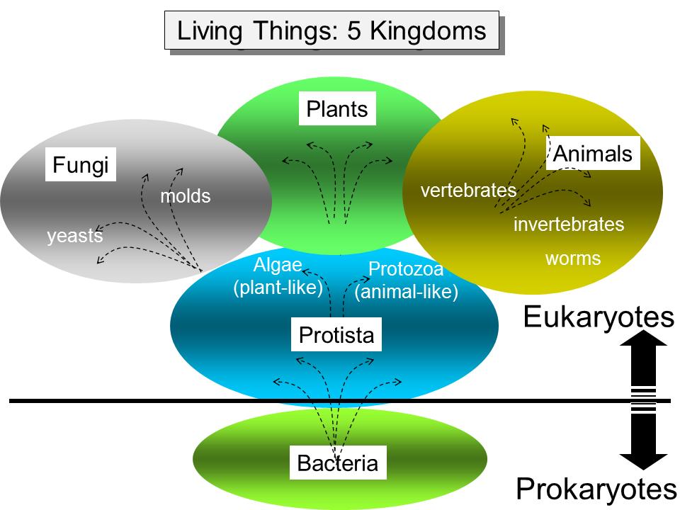 Printable Worksheets five kingdoms of living things worksheets : the 5 kingdoms of living things - Buscar con Google | School ...