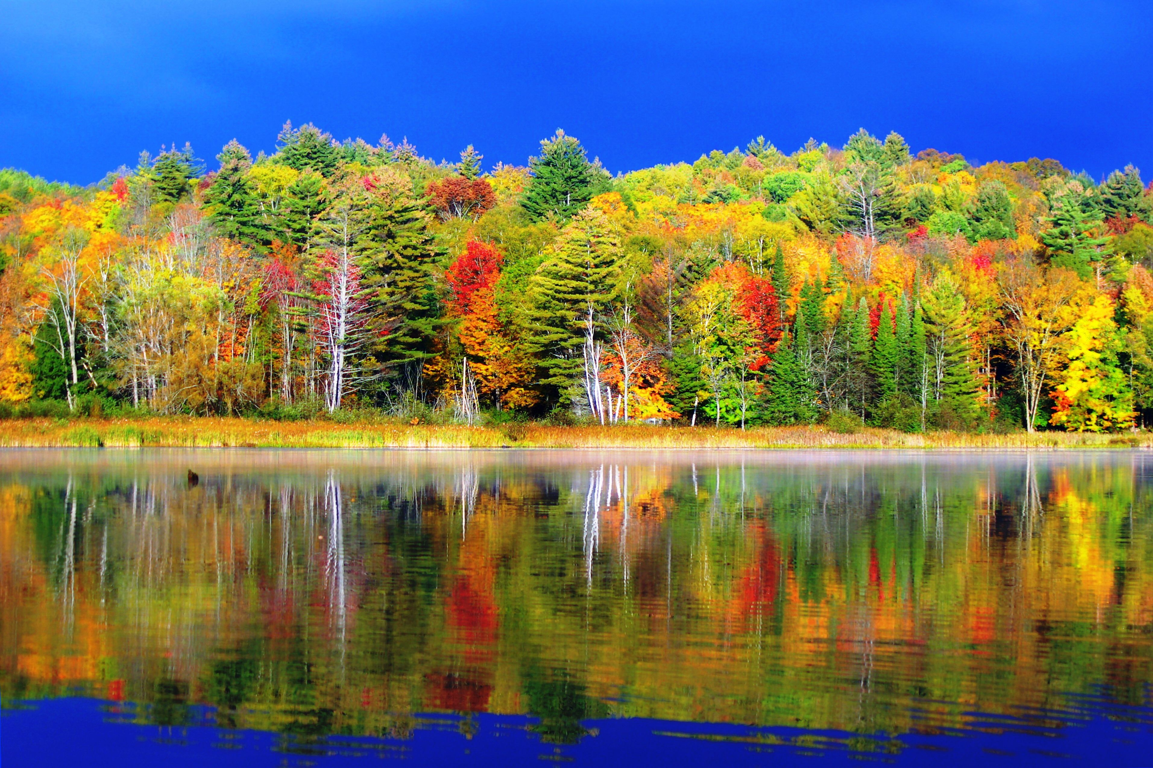 campground area book rental cabins kitchen in accommodations your cabin lake now george adirondacks adirondack img rentals near