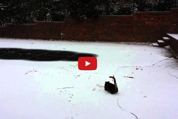 Sophie The Alabama House Cat Experiences Snow For The First Time And I Can't Believe How She Reacted!