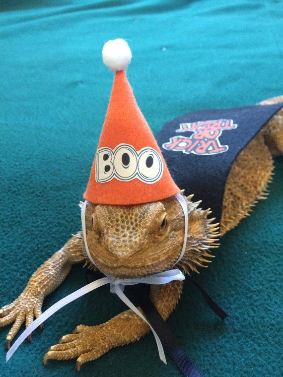 8b3c3f312c8 Halloween Hats for Bearded Dragons