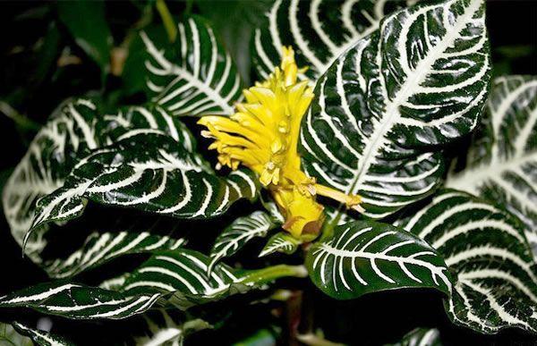 Cuatro plantas ex ticas de interior dream garden for Plantas de interior exoticas