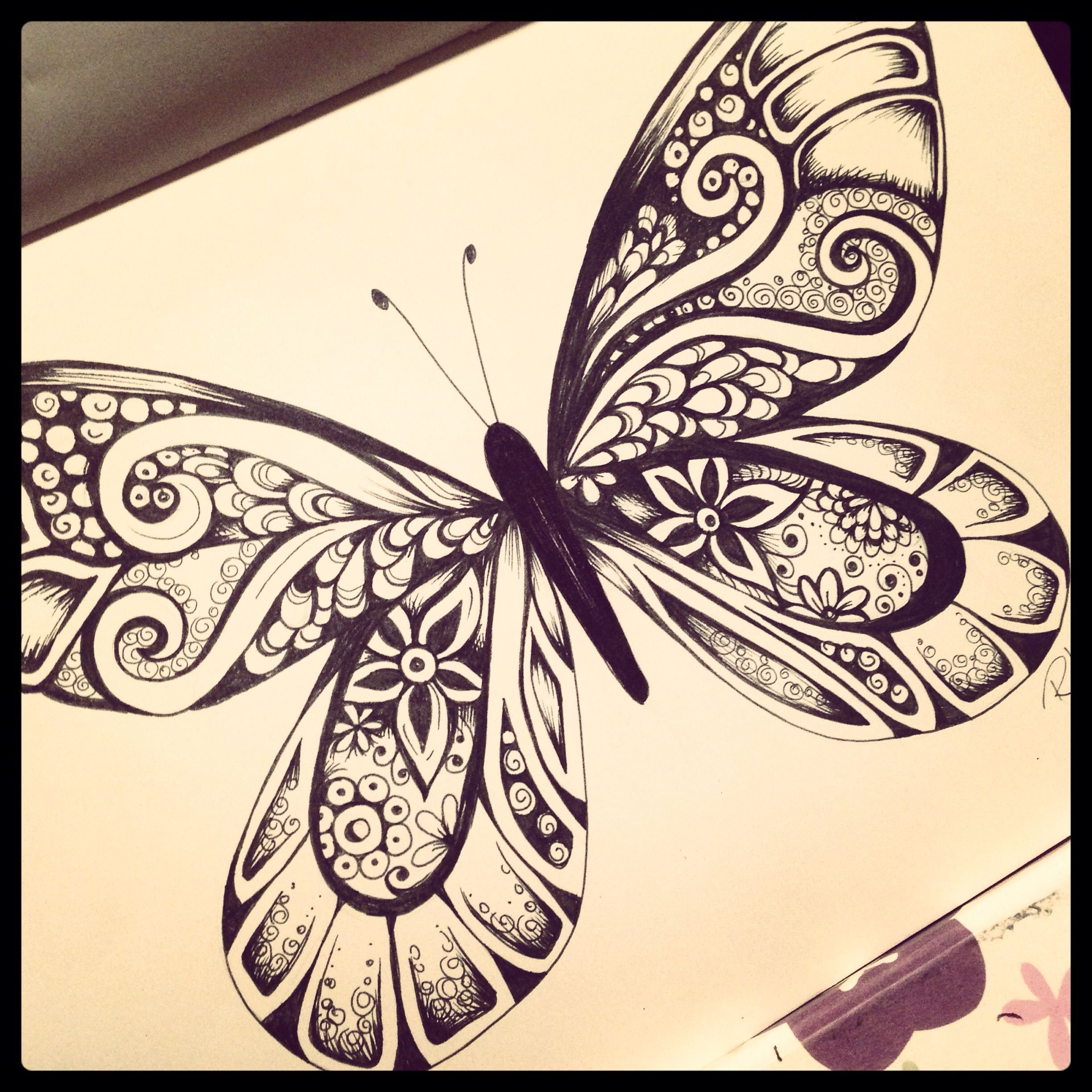 Butterfly drawing in ink - Robyn Lamont Art and Design ...