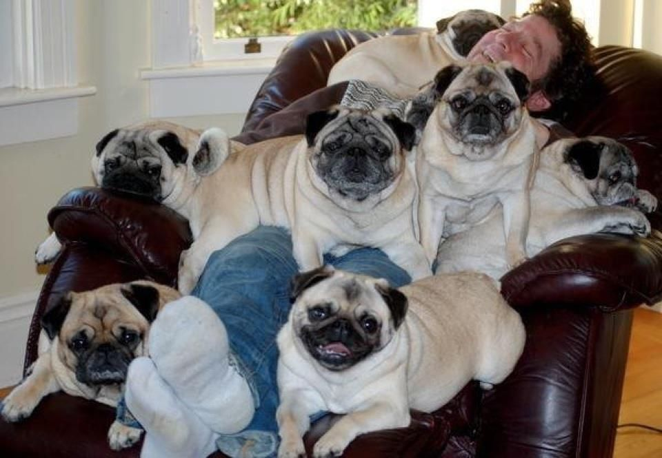 That S A Snort Fest For Sure Pugs Funny Pugs Pug Dog Pictures