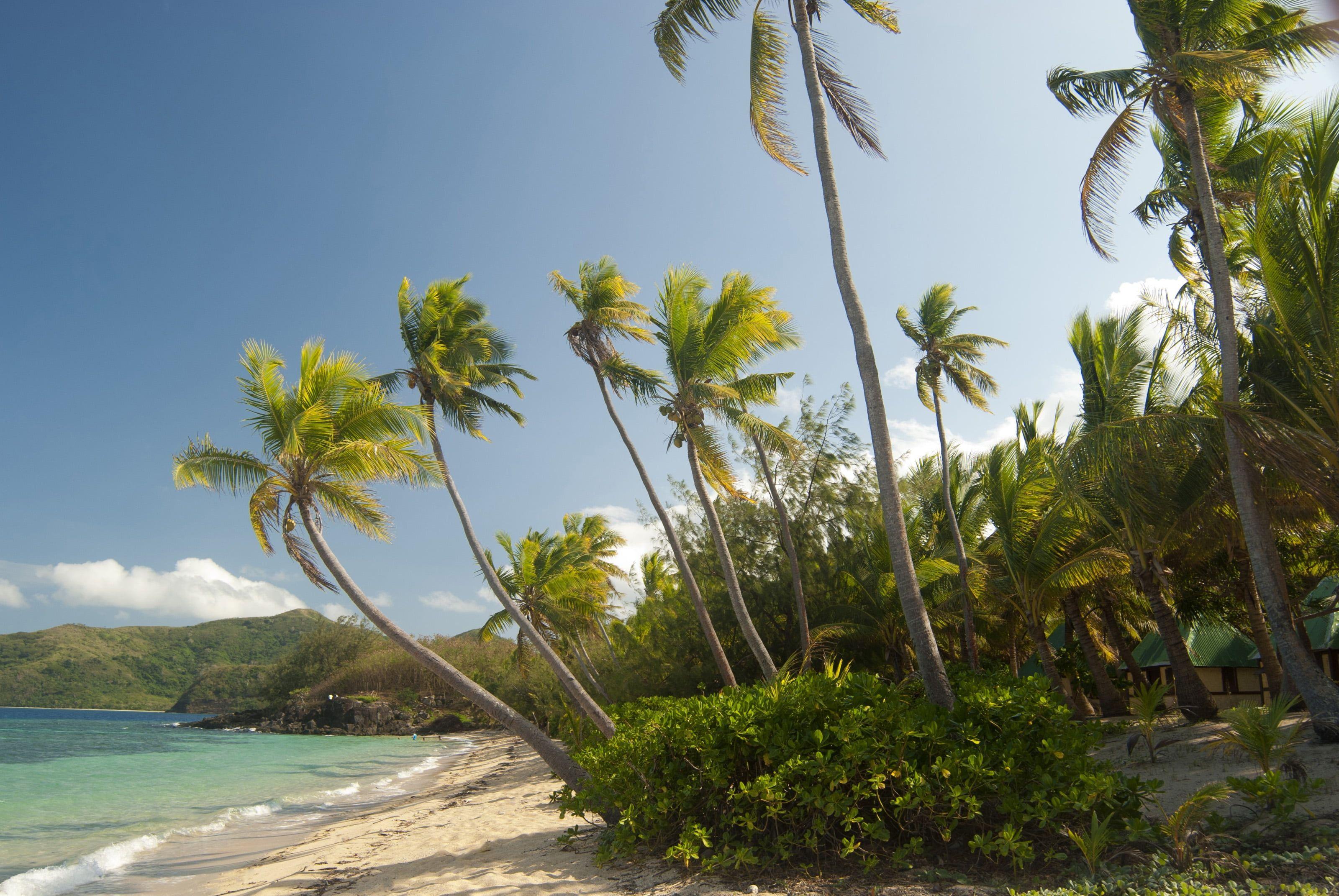 Palm Tree Lot Maldives Tropical Beach Palm Trees 2k Wallpaper Hdwallpaper Desktop Palm Trees Wallpaper Beach Palm Trees