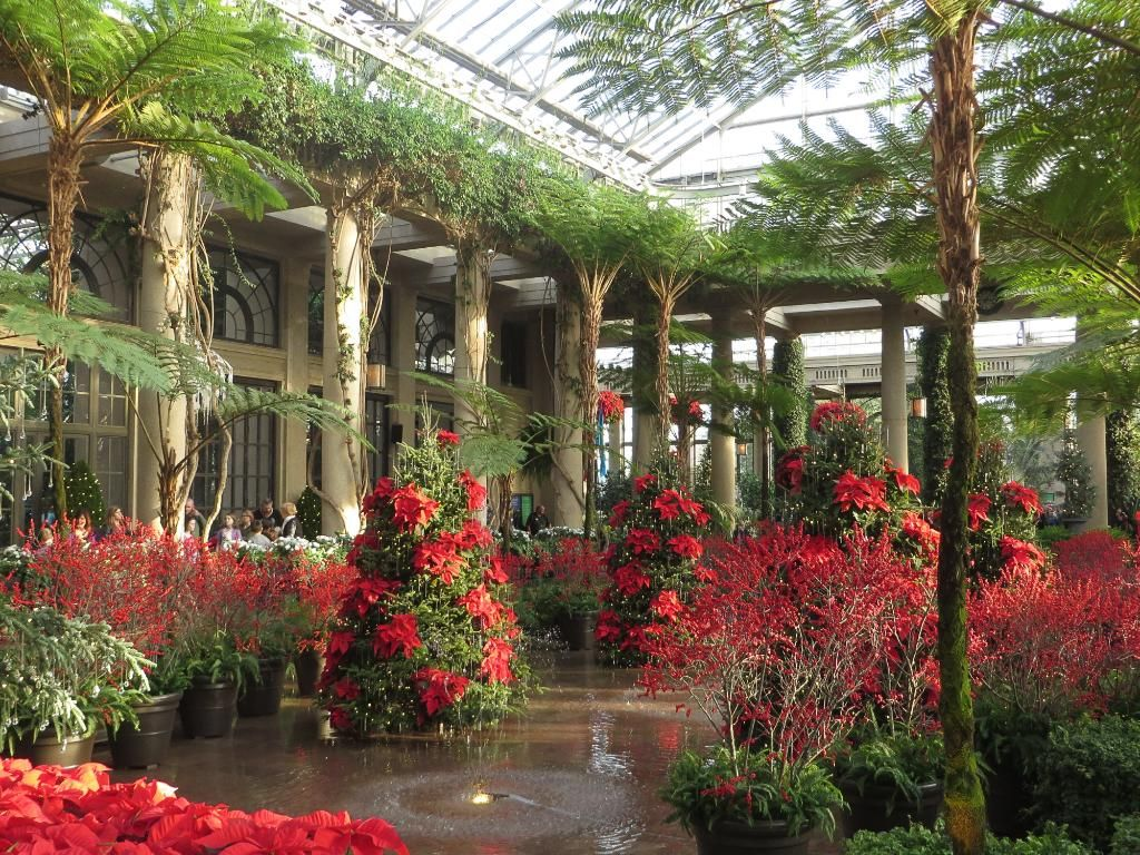Orchid Extravaganza! Review of Longwood Gardens,