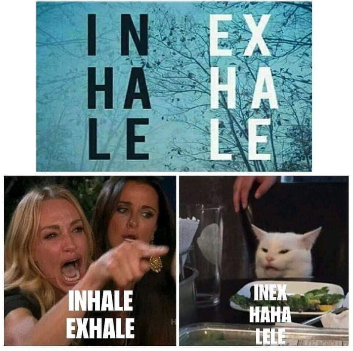 Cat Woman Meme Video