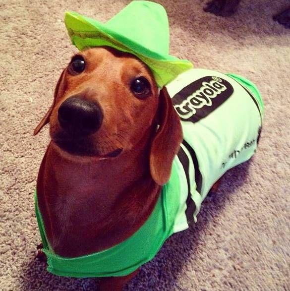 20 Creative Ways To Dress Your Weenie This Halloween Dog