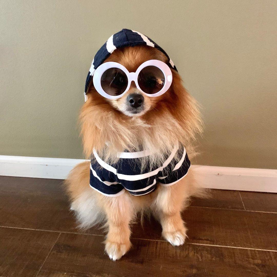 The Dog Hoodie Navy Dog Hoodie Dogs Hoodies