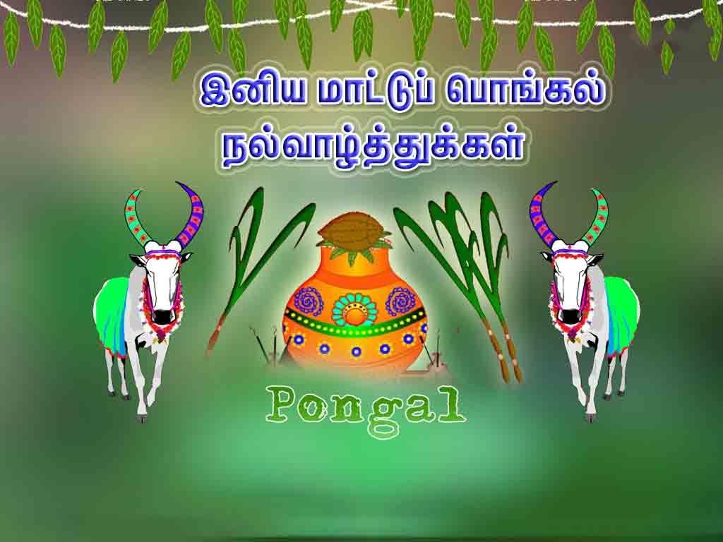 Happy Maatu Pongal Wishes 2019 Wishes for friends, Happy