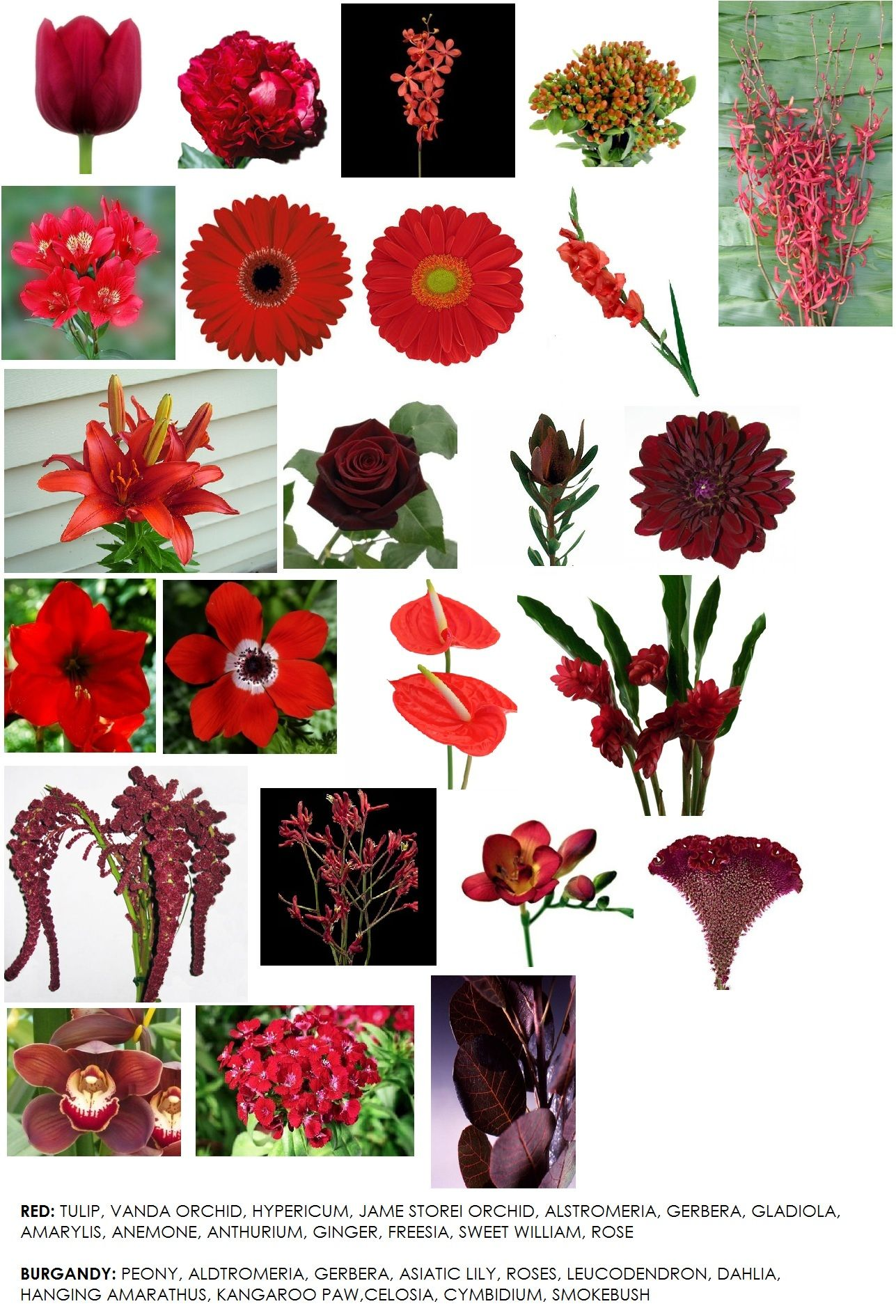 Names Of Fall Flowers | o2 Pilates