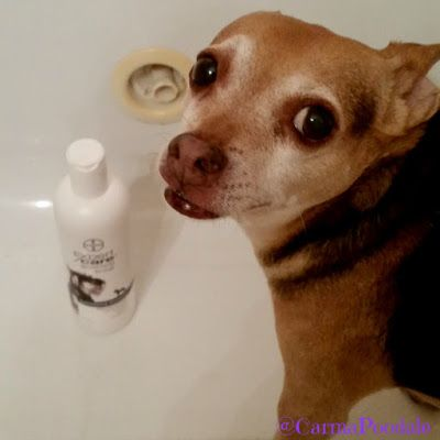 Scooby Doo in the tub with Bayer ExpertCare shampoo #BayerExpertCare