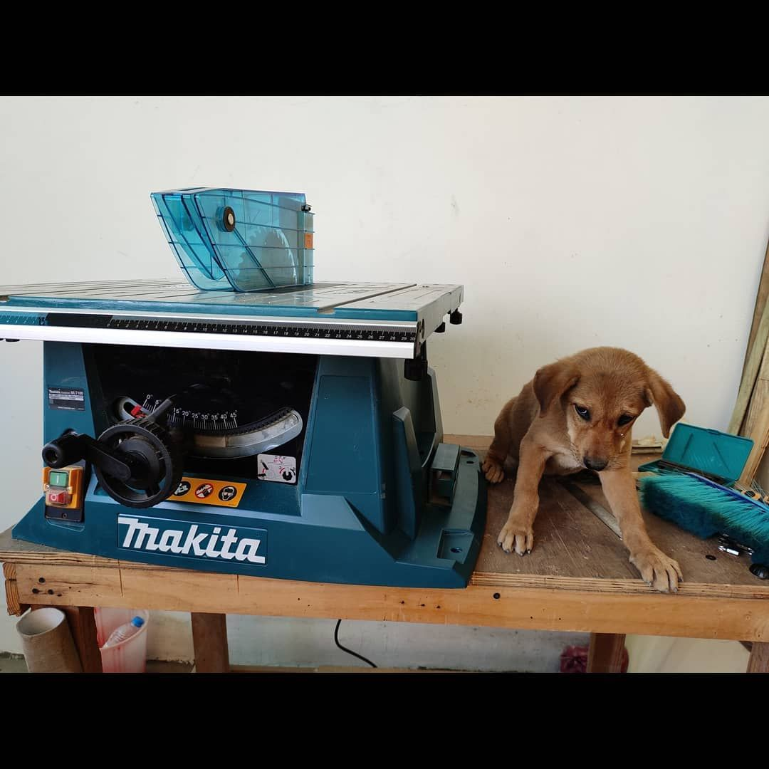 Heres welcoming the newest member of the family.  No, not my shop dog chewbarka, Im taking about the Makita table saw ;) she was helping me setup and occasionally watering my plants  Just threw together a quick bench for the table saw too  #woodworking #wood #handmade #woodwork #woodworker #design #diy #woodshop #makitatools #woodart #carpentry #shopdog #woodcraft #maker #handcrafted #woodworkers #wooddesign #woodcarving #carpenter #wooden #woodworkingtools #tablesaw #makersgonnamake #custom #ma #woodcarvingtoo