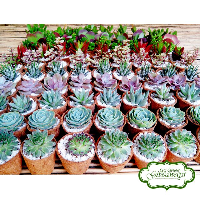 Pin by Go Green Giveaways on Succulents In Coco Pots