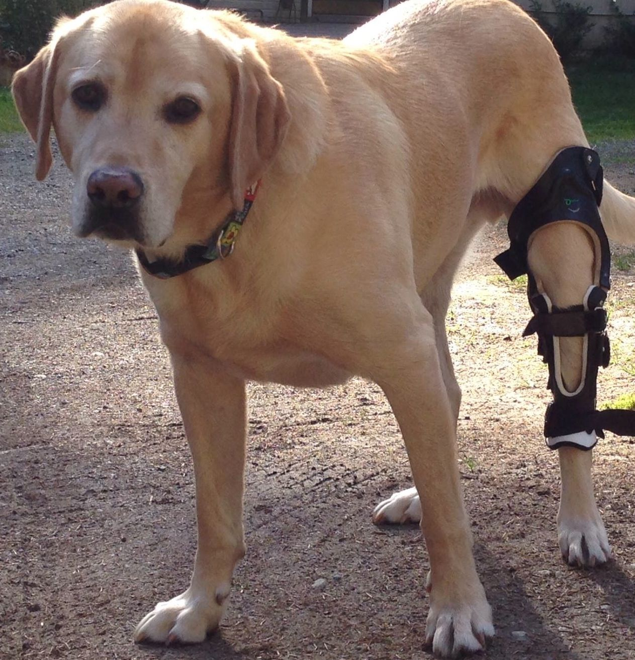 Dog Knee Brace - Custom ACL Brace for Your Dog | Life~Musiq, Our 4
