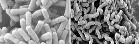 De werking van EM micro-organismen wetenschappelijk aangetoond!
