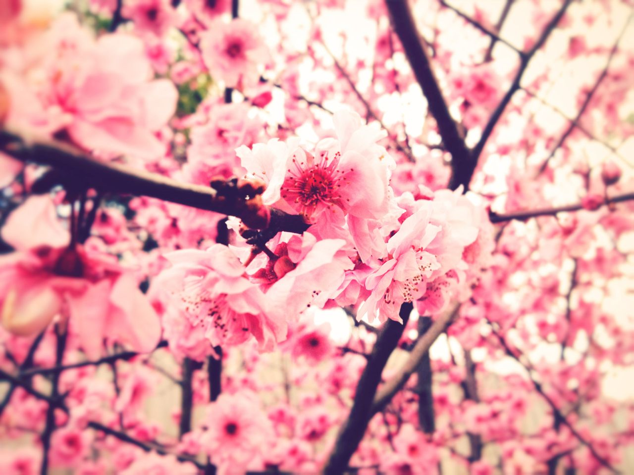 Related Wallpaper. Flowers Tumblr Photography 48 | love it ...