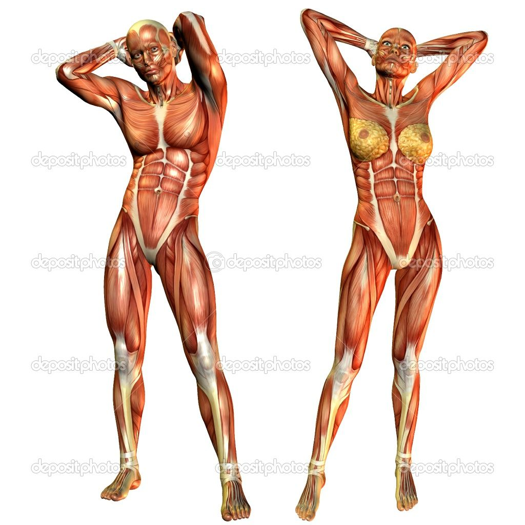 depositphotos_4024990-Muscle-men-and-women-from-the-front.jpg 1,024 ...