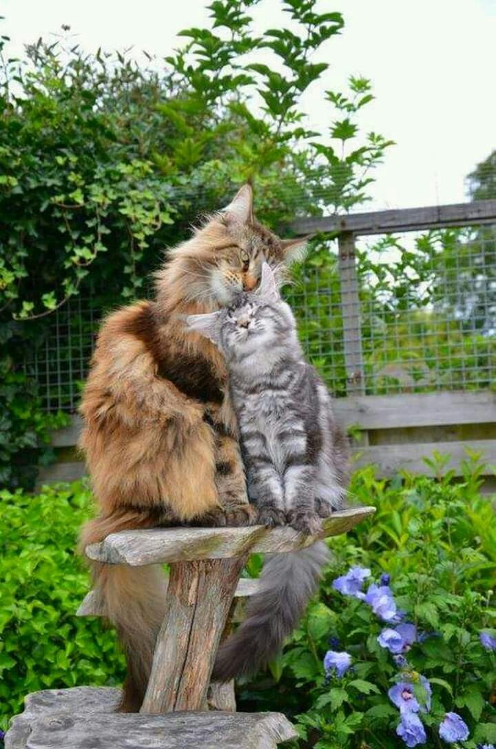 Katzen 🐾🐈❤️❤️❤️❤️❤️🤗