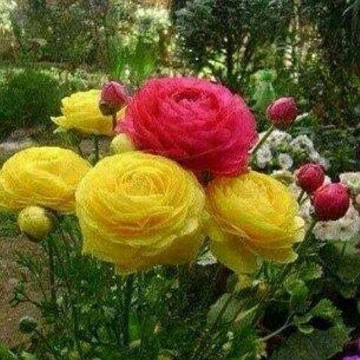 Beautiful Beautiful Flowers Flowers Planting Flowers