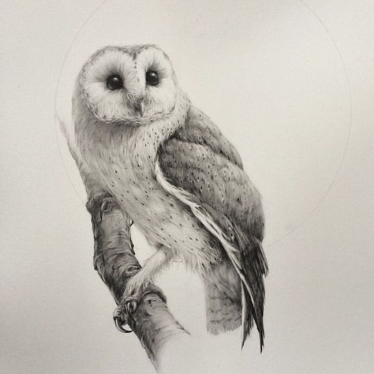 Barn owl drawings in pencil pdf