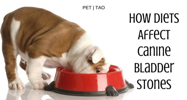 Learn The Importance Of Diet For Bladder Stones In Dogs Dog Food