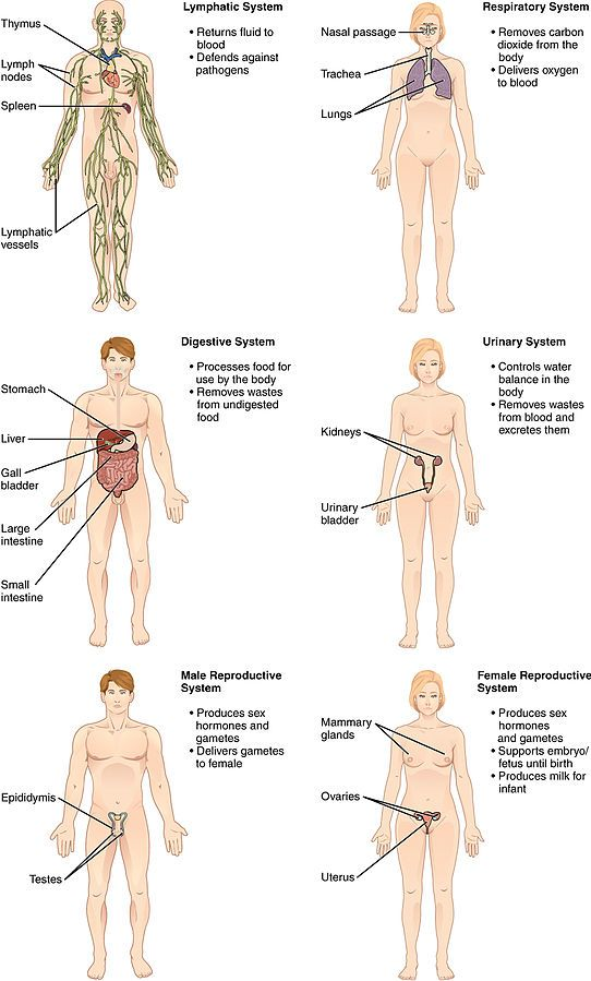 Organ Systems II.jpg | Nursing | Pinterest | Learning english and ...