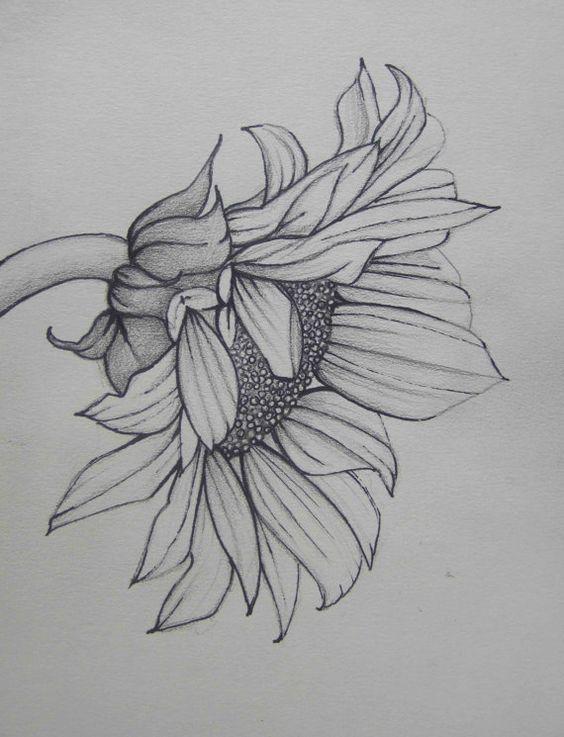 77f63599a3bb40ca7bd36a7f18e522ff Jpg 564 737 Pixeles Girasoles Dibujo Arte Del Bosquejo Dibujos