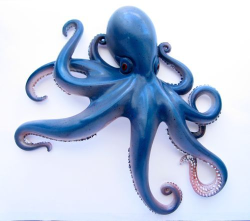 resinseahorseoutdoorwallart octopus tentacles navy blue wall decor - Blue Wall Decor