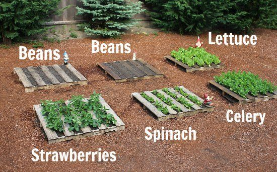 Gardening with old pallets.