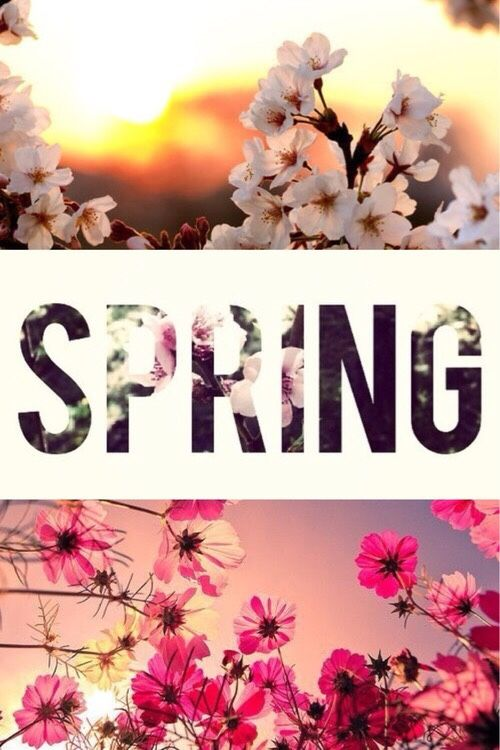 tumblrSpring Spring wallpaper, Spring background, Hello