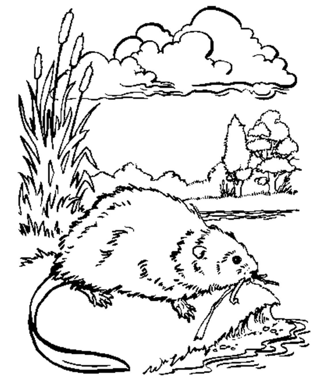 Muskrat Coloring Pages Download Puppy Coloring Pages Dog Coloring Book Coloring Pages [ 1350 x 1114 Pixel ]