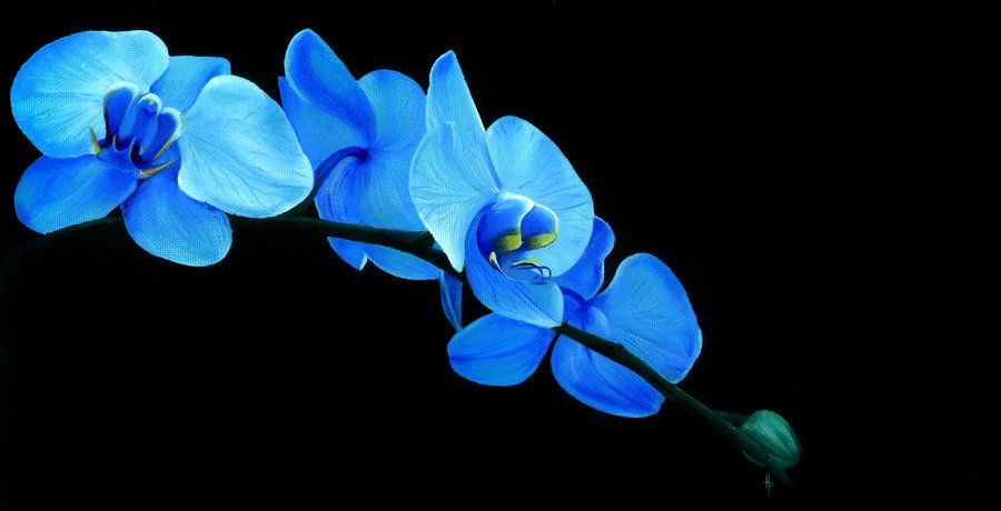 Blue Orchid By Li Soro On Deviantart Blue Orchid Flower Blue Orchids Orchids
