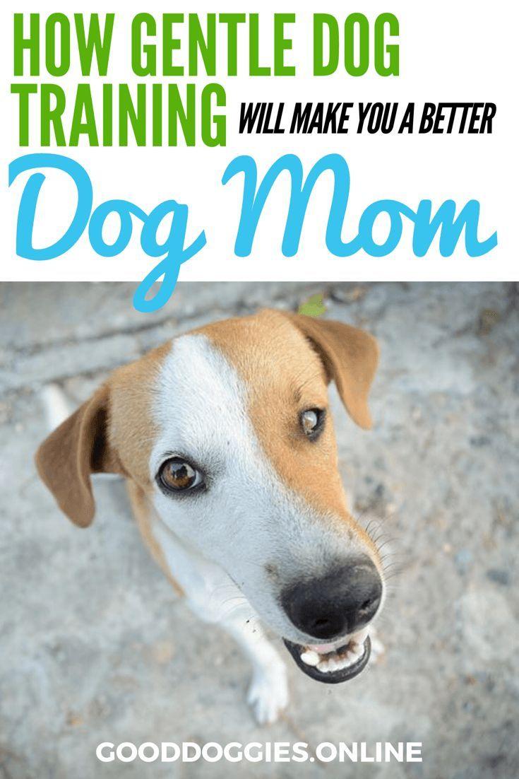Gentle Dog Training Techniques Good Dog Info Dog Training