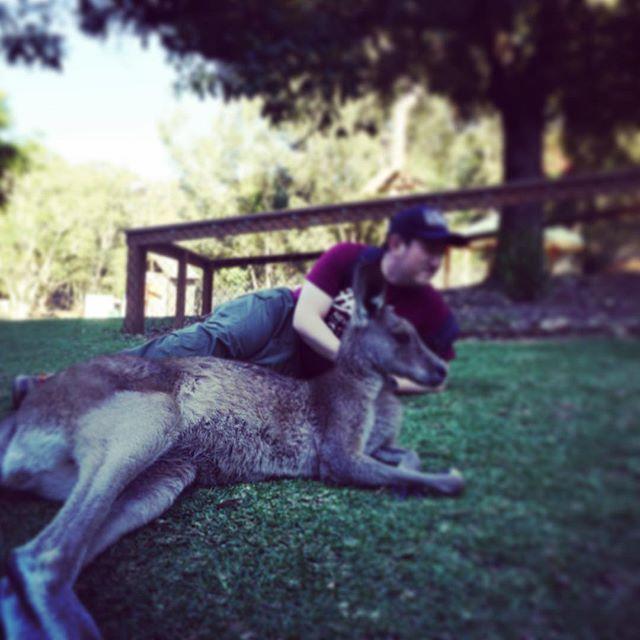本当はこんな感じにしたかったの #Australia #GoldCoast #新婚旅行 #currumbinwildlifesanctuary by yoko777 http://ift.tt/1X9mXhV