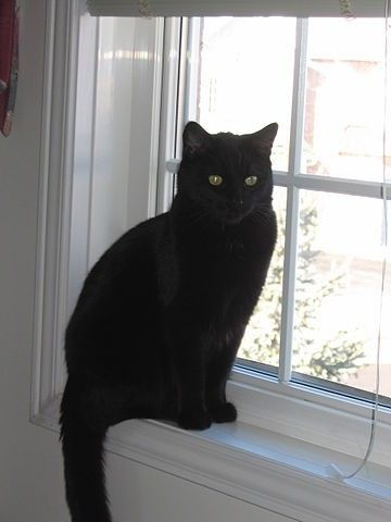 gatto nero - Cerca con Google