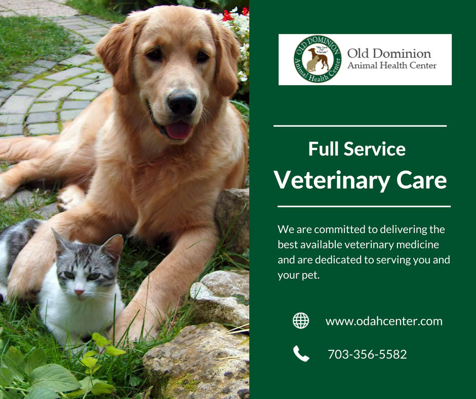 Get effective and quality veterinary care for your pets at
