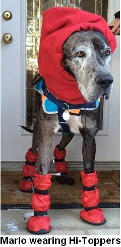 Great Dane Wears Tall Boots In Winter Dog Boots Tallest Dog Boots