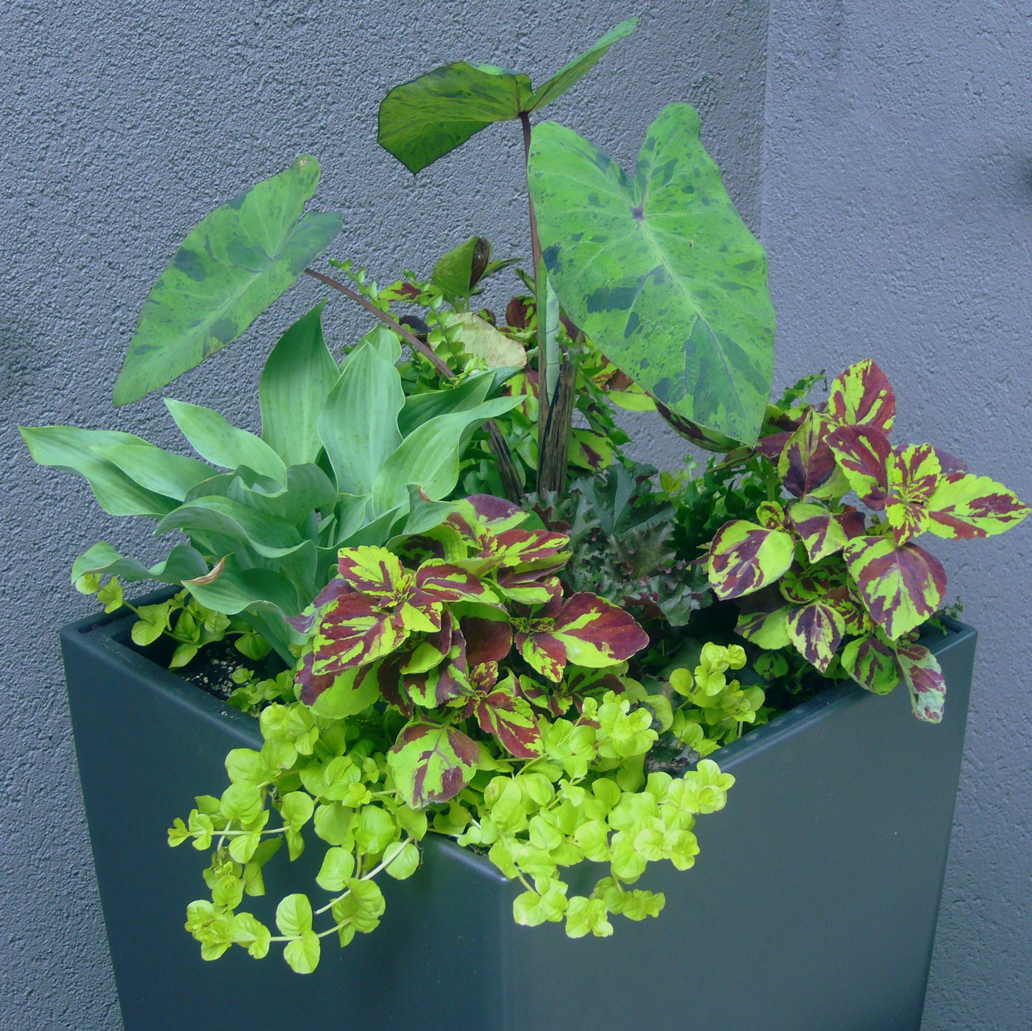 Finding Plant Combinations For Shade Containers Can Be