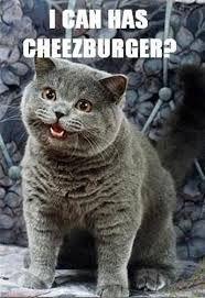 Resultado De Imagem Para Gatos Engraçados E Loucos Com Frases