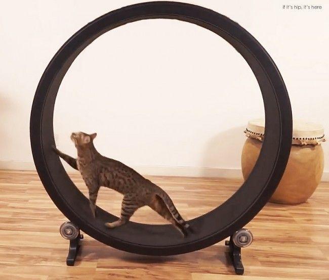 Faire faire de l'exercice à son chat | Cat furniture, Cat
