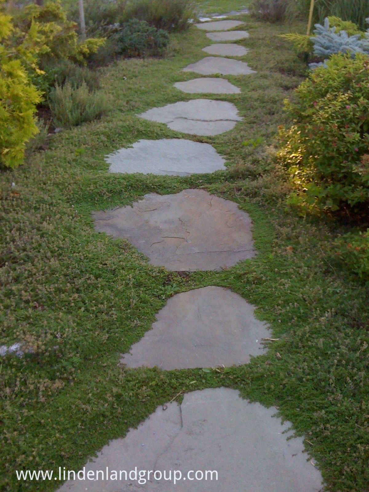 Bluestone flagging stepping stone path with thymus minus for Rock stepping stones landscaping
