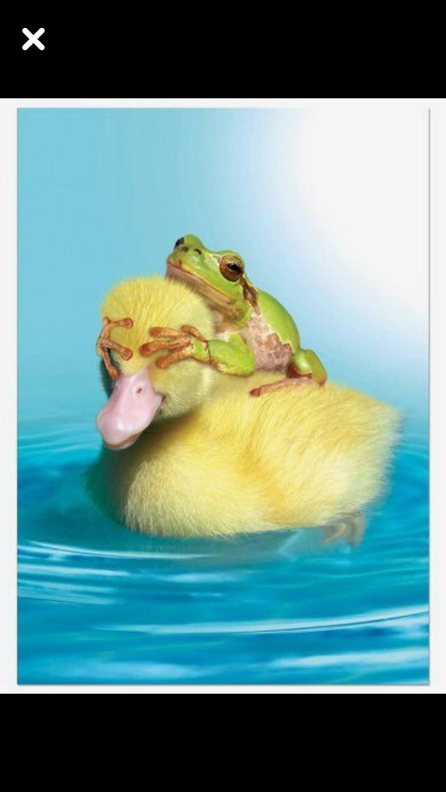 Pin by Debbie Gallo on Animals   Pinterest   Animal, Frogs and ...